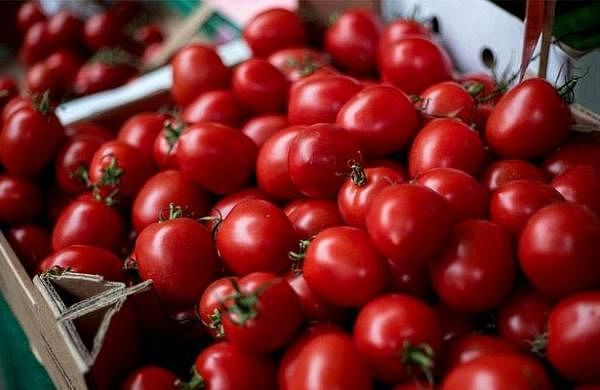 634433-tomato-proces