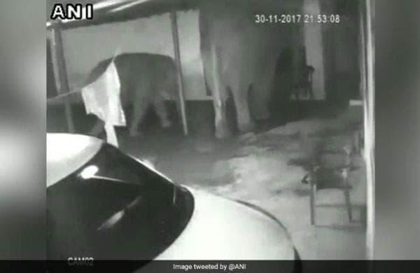 elephants-enter-c