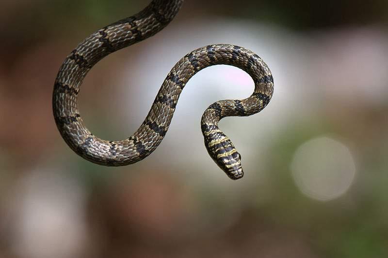 snakekjkljklj