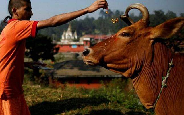 cow-reuters-story_647_052917065231