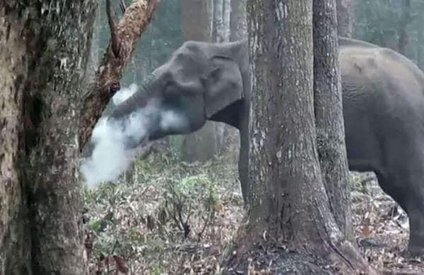 elephantvbnvb