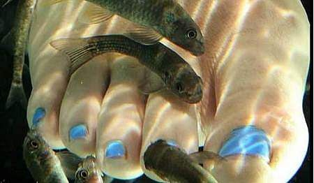 Fish-Spanm,mn,n