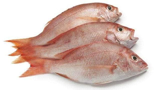 504173363-fish-eating_6jkjlj