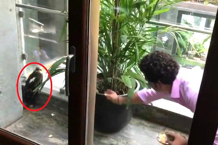 Sachin-feeding-bird