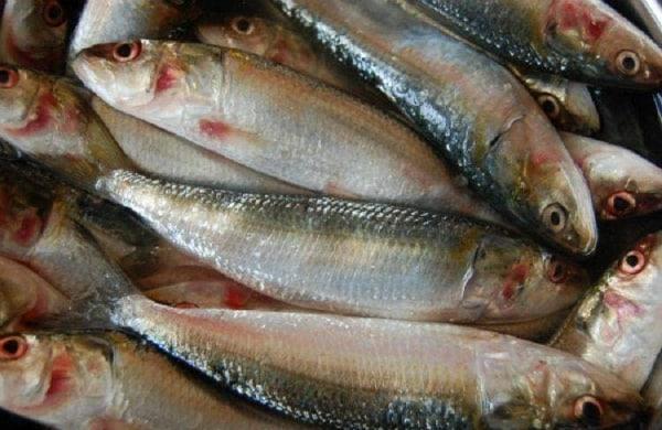 fishdf