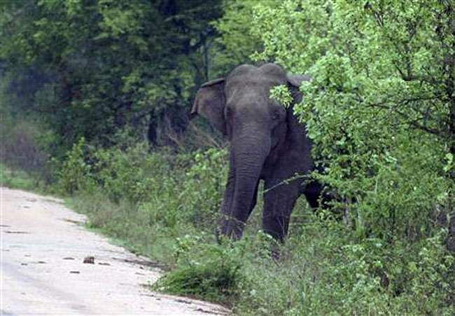 elephant_