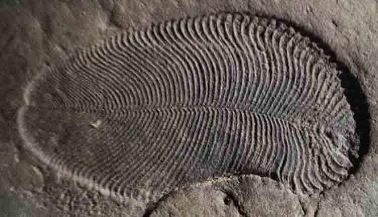 animal-fossil2