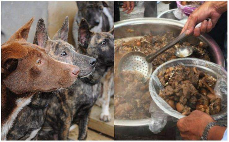 DOG_MEAT