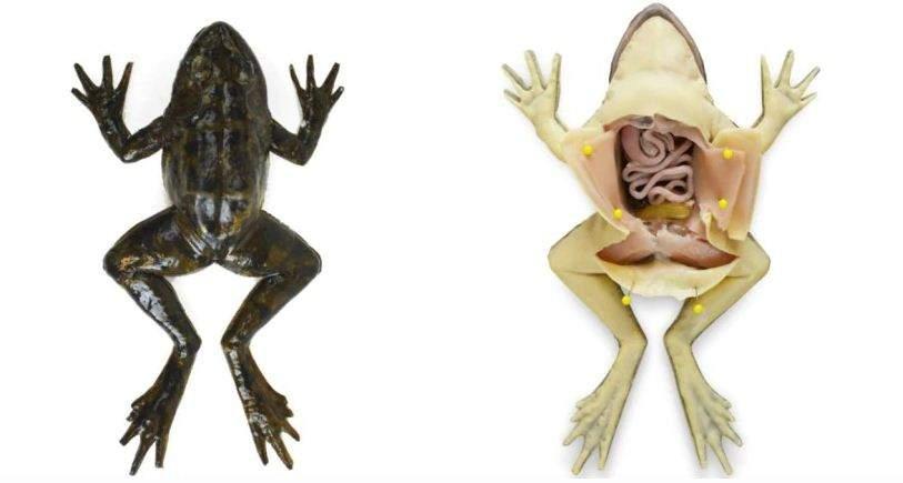 frog12