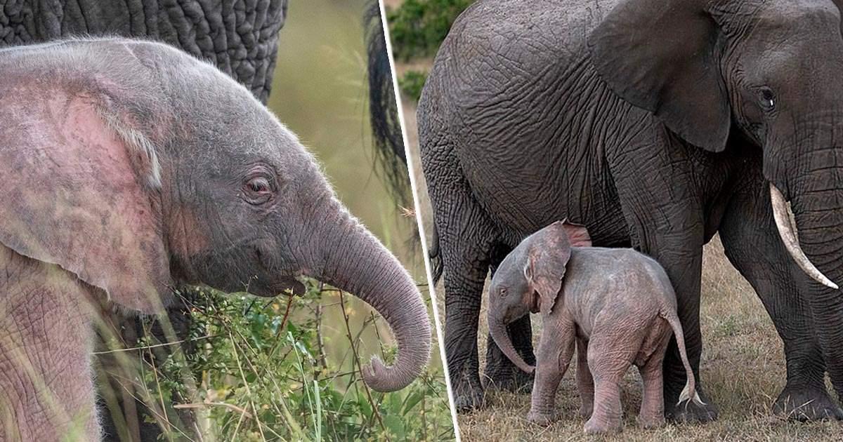 pink-elephant-fb