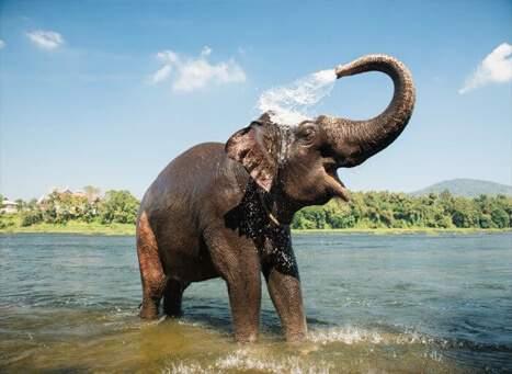 Elephant-Lake