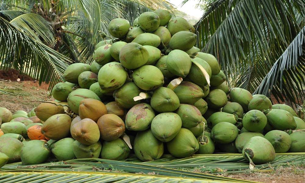 young-green-coconut