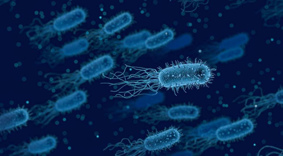 bacteria-3662695_960_720