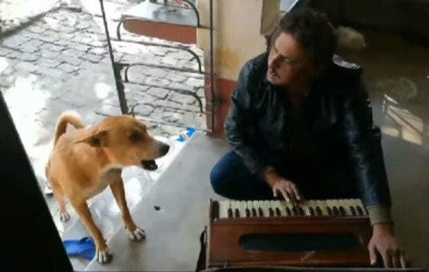 dog_sing