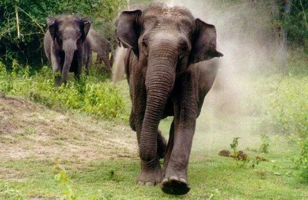 elephant killed father and son