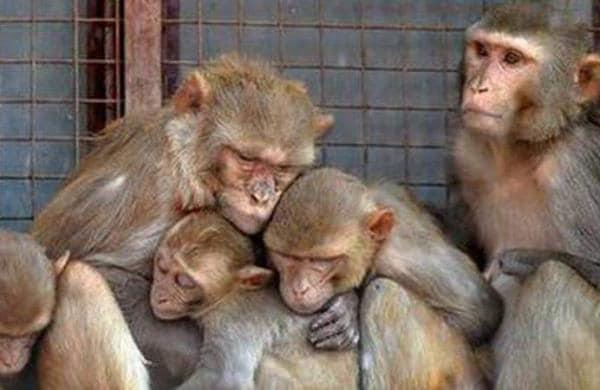 Monkeys_PTI