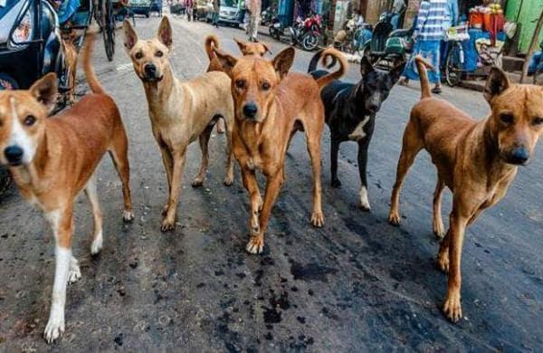 street_dogs