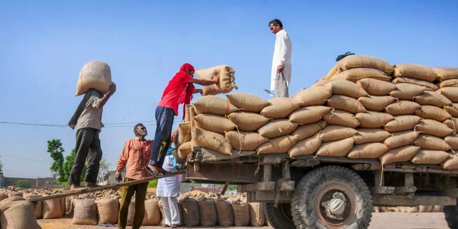 wheat-production-India8
