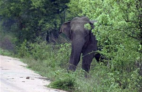 elephant57678