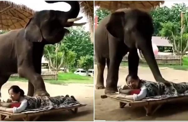 elephant_viral_video
