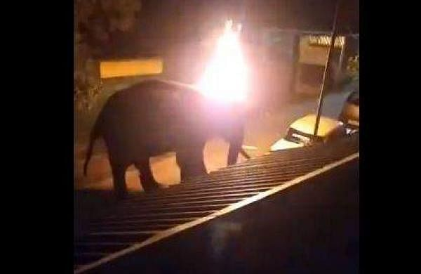 The people throw a lit-tyre on a elephant