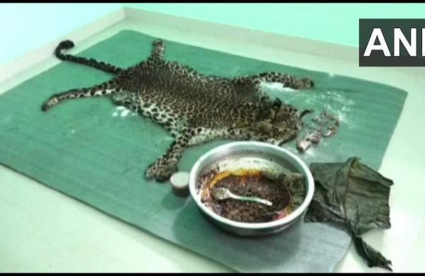 gang tried to sell leopard skin