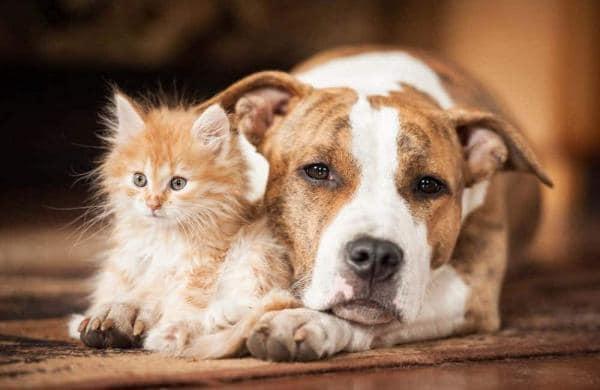 Cruelty to pets in Kochi