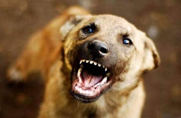 rabies vaccine failed