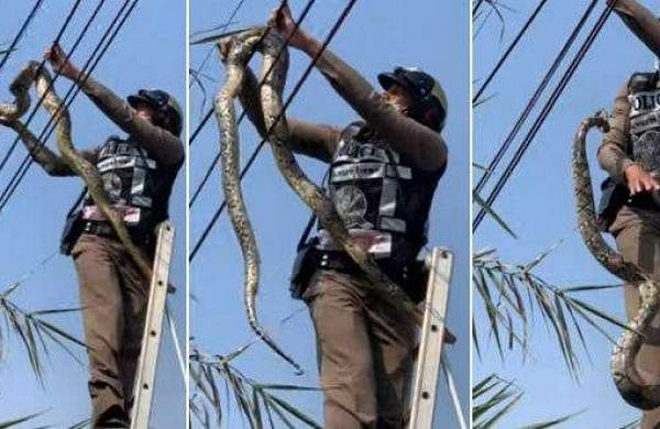 A giant snake wrapped around a power line