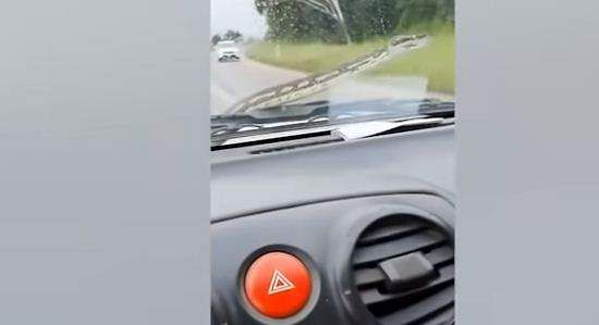couple uses windscreen wipers to remove snake from moving car