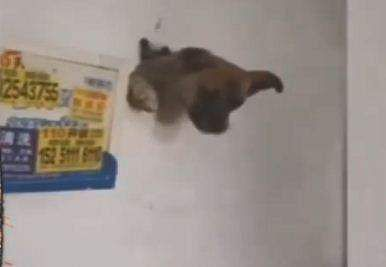 dog gets trapped behind wall