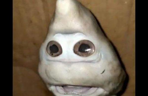baby shark with human like face