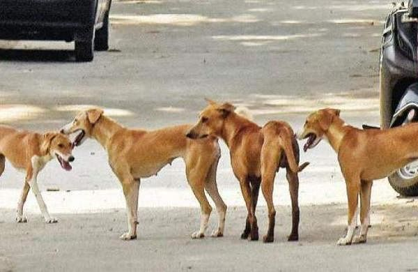 Stray dog carries infant's corpse outside govt hospital in Odisha