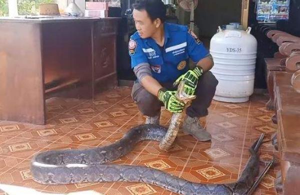 giant python Behind the fridge
