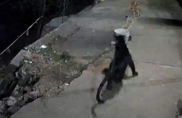 black panther attack the dog in ooty