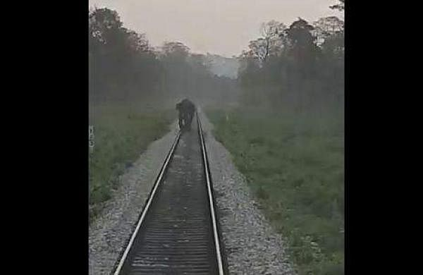 loco pilots halt train to allow wild elephants to pass