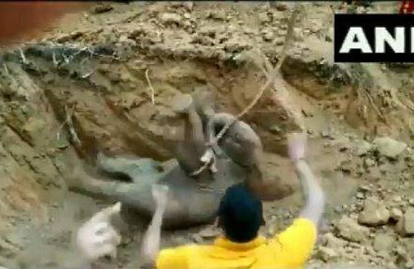 Elephant calf rescued from 15-feet deep well