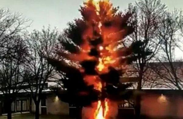 dramatic video shows lightning strike destroying a tree