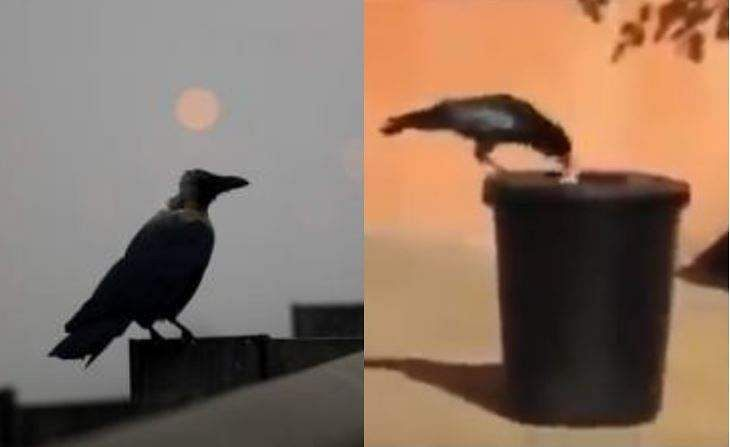 crow_cleaning_garbage