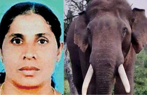 elephant_attack