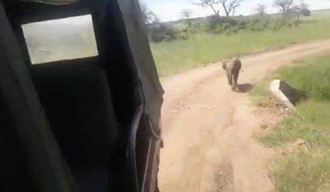 reunite baby elephant with herd, viral video