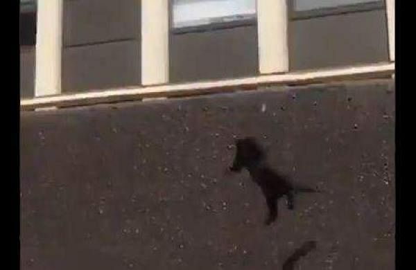 cat  leaping from the 5th floor of a burning apartment