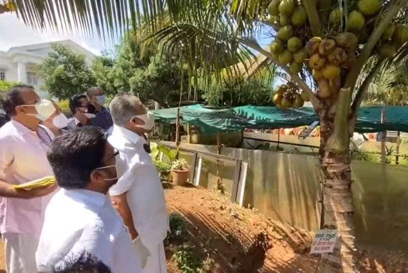 pinarayi coconut tree