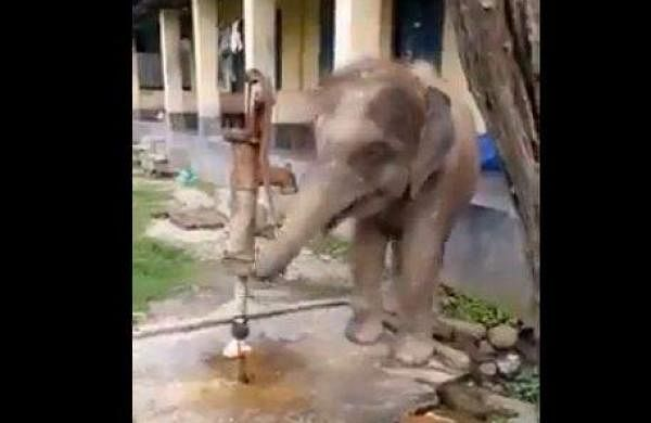 elephant calf Open the tap and drinking water