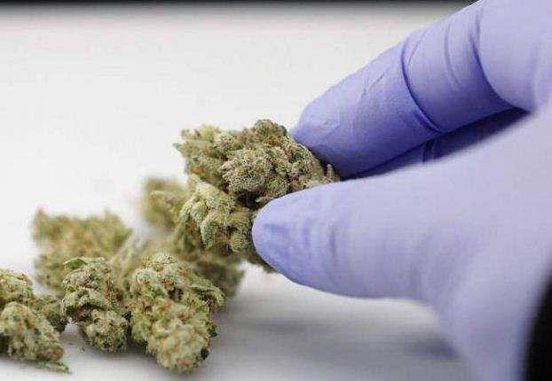 Marijuana stores can offer joints for vaccines