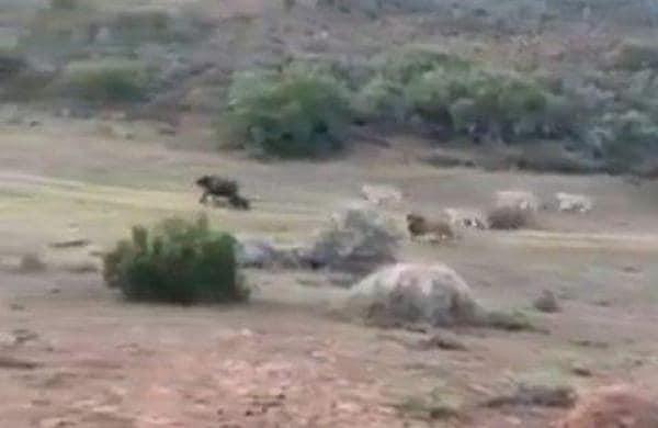 animal battle
