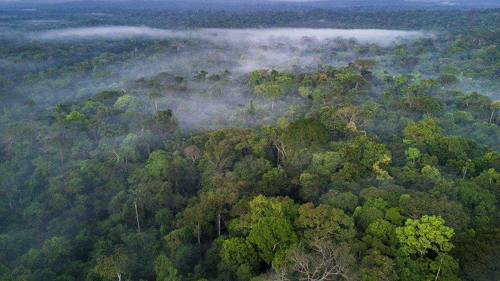 youth trapped in forest rescued