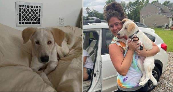 Sherry, blind stray dog from Jhansi