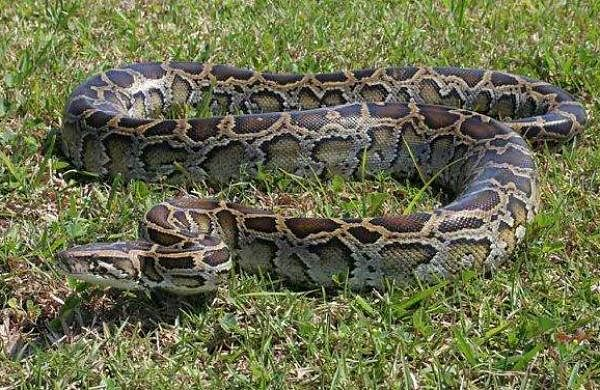 python found out from kannur