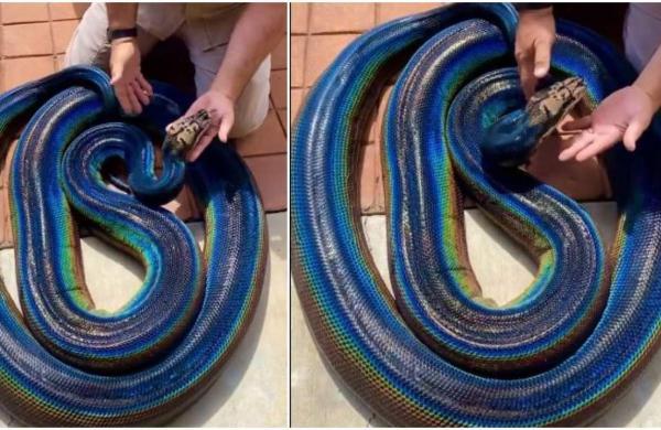 rainbow_python